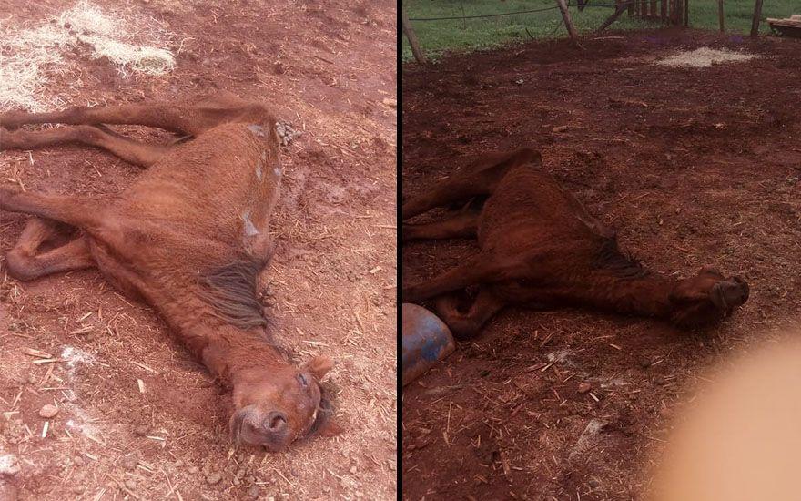 Revide, Denúncia nas redes sociais aponta maus tratos a animais em haras de Ribeirão Preto, égua, cavalos, haras