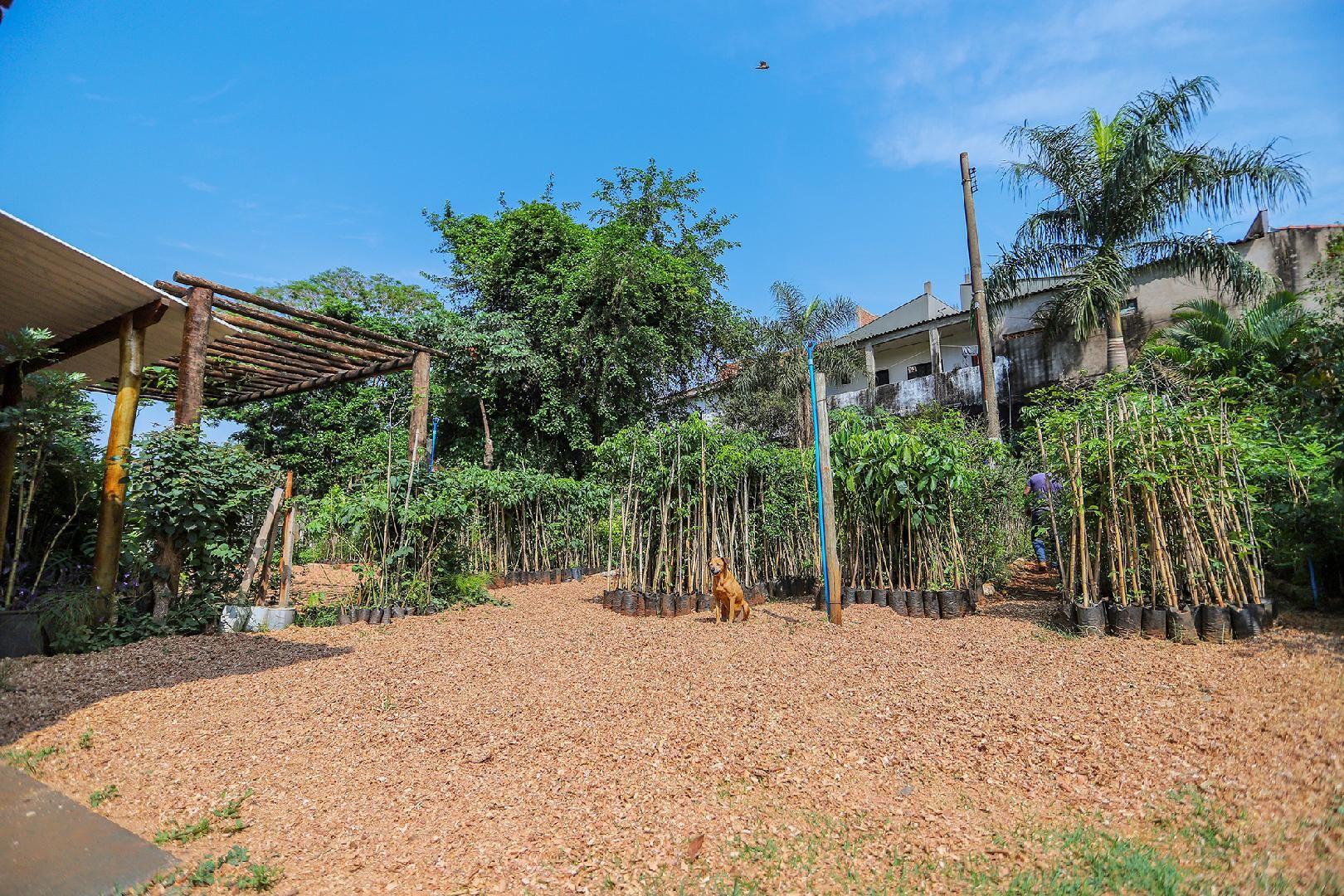 Revide, Horto Municipal faz doações de mudas para arborizar Ribeirão Preto , Meio ambiente, Ribeirão Preto, regularização ambientar, atualidades